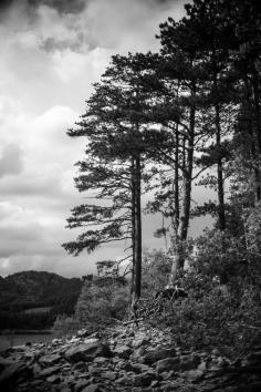 alberi sul suviana