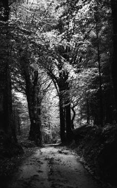 la-strada-nel-bosco